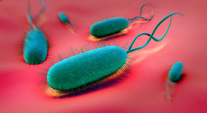 helicbacter_pylori_cures_natural_proven